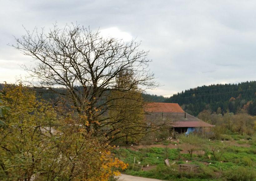 Sachsenhof1