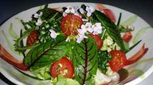 Salat_Glueck02