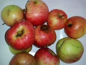 Apfel_Sandra01